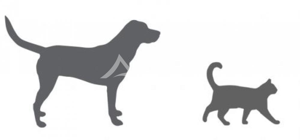 Pets: perfil de moradia dos brasileiros que têm um bichinho de estimação