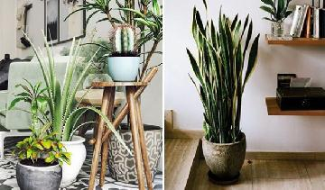 Veja como refrescar o ambiente com plantas